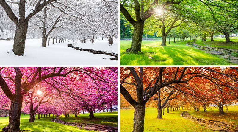 Seasonal Guide to Landscaping
