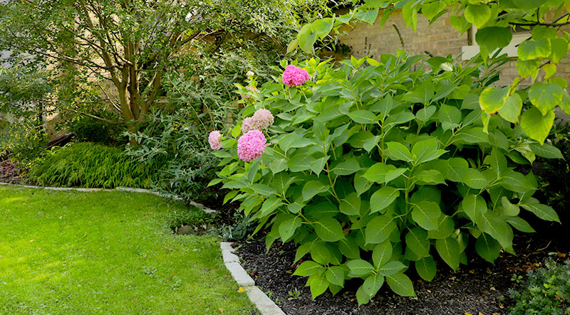 Creating a Beautiful Garden