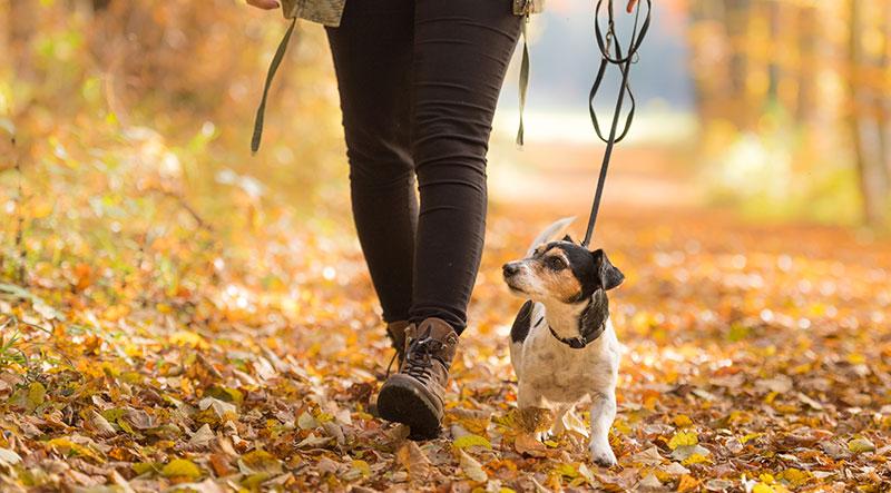 Fall Favourites & Activities
