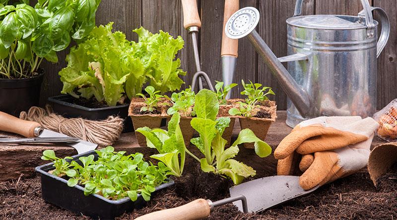 Growing a Veggie Garden