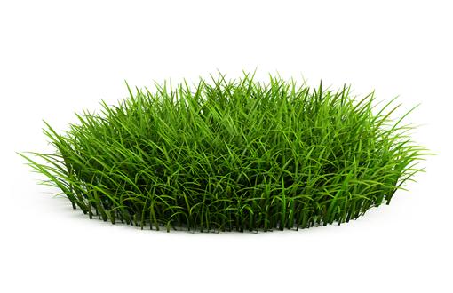 Grass & Turf