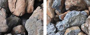 Beechwood Pebble (1/2″ – 1″)
