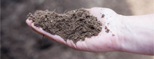 Screened Topsoil - OUT OF STOCK